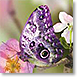 Butterfly Delights - Design Collections from Colorful Images