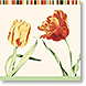 Elegant Tulips - Design Collections from Colorful Images