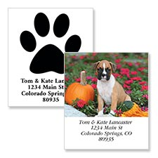Shop Cat Labels at Colorful Images