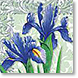 Iris - Design Collections from Colorful Images