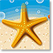 Starfish Trio - Design Collections from Colorful Images