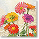Gerbera - Design Collections from Colorful Images