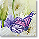 Butterfly - Design Collections from Colorful Images