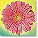 Illuminated Petals - Design Collections from Colorful Images