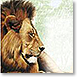 Trip To Africa - Design Collections from Colorful Images