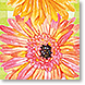 Gerbera Daisy - Design Collections from Colorful Images