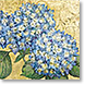 Hydrangea - Design Collections from Colorful Images