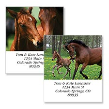 Shop Horses Labels at Colorful Images